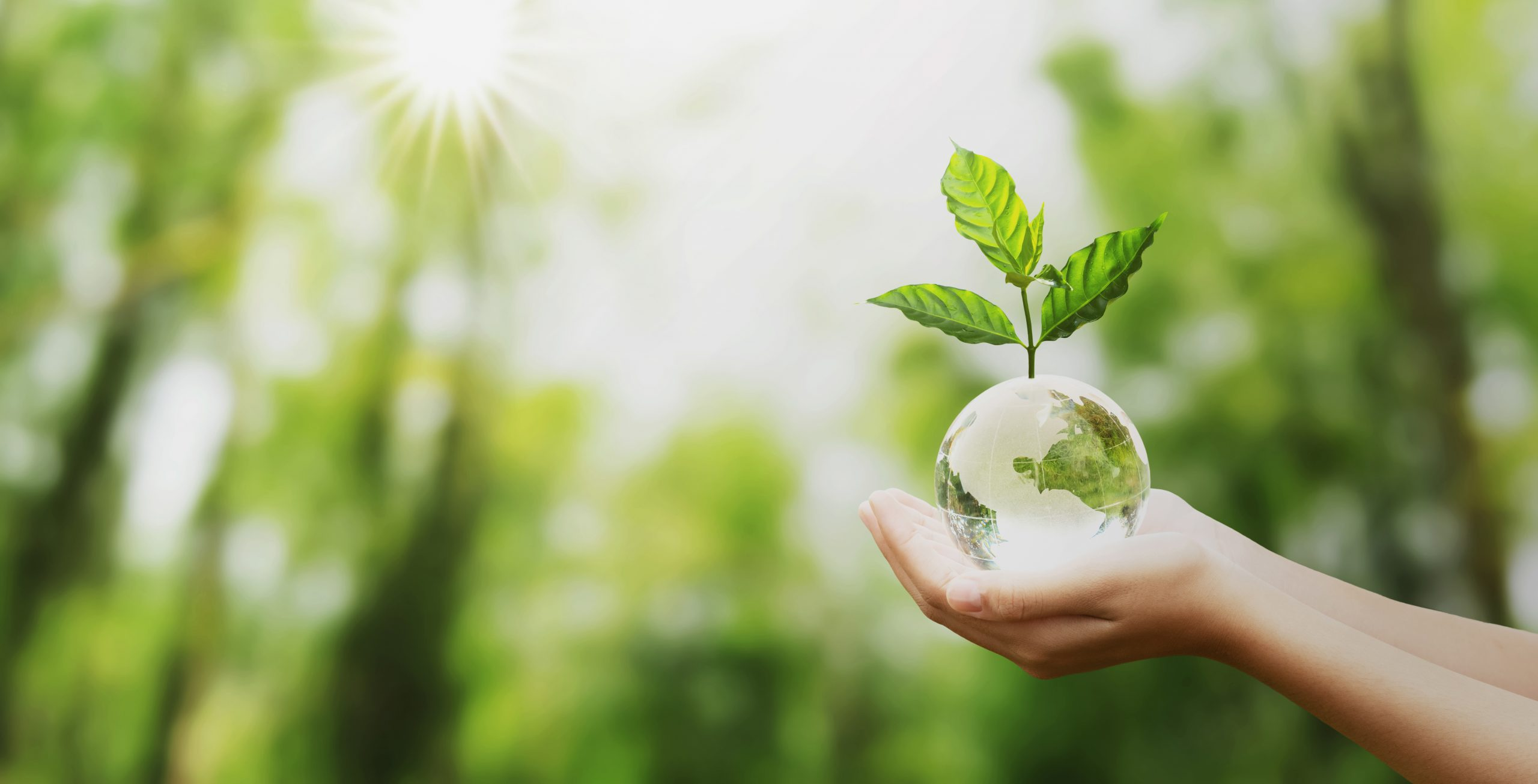 World Environment Day Activities for Your ESL Class